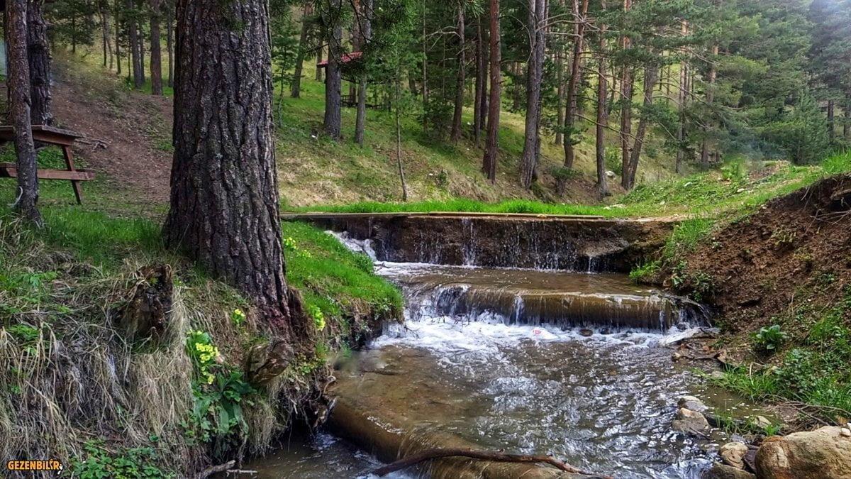 Çat Ormanları