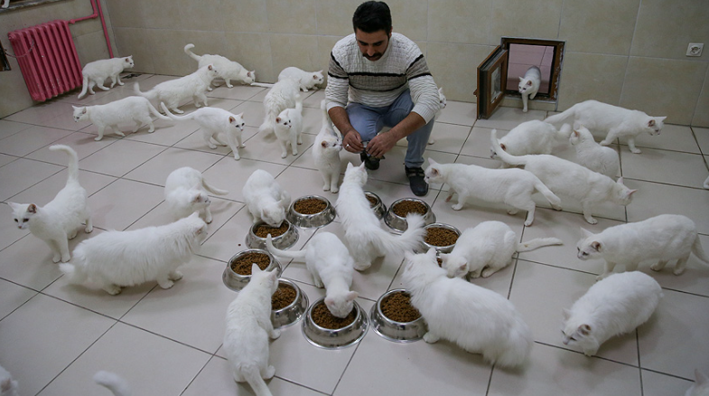 van kedisi villasi hizmetleri - Van Kedisi Villası